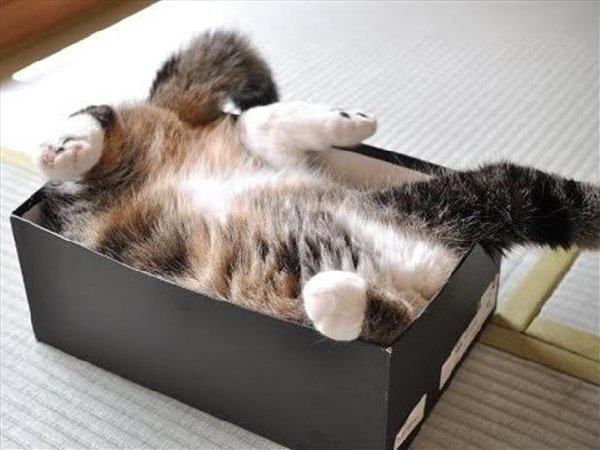 http://www.dumpaday.com/wp-content/uploads/2014/04/if-i-fits-i-sits-15.jpg