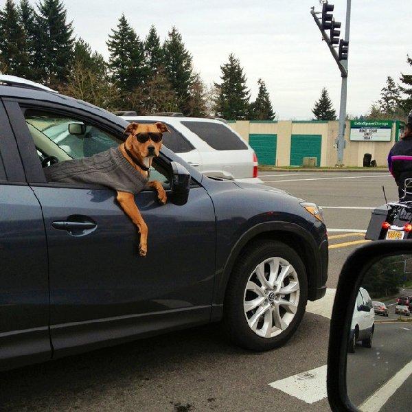 http://cdn.emgn.com/wp-content/uploads/2015/03/Dog-Heroes-EMGN13.jpg