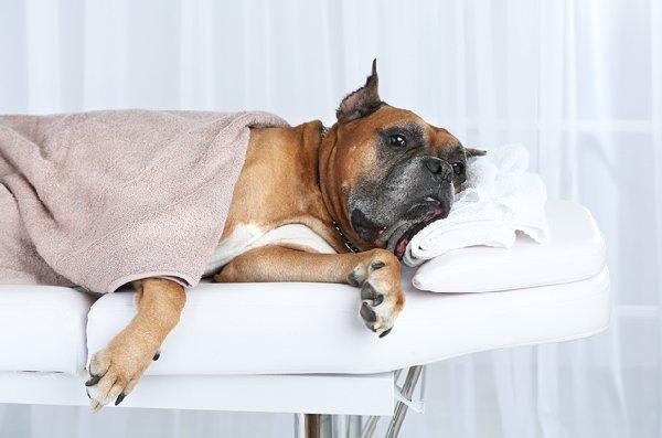 http://petguide.com.vsassets.com/wp-content/uploads/2015/10/in-home-dog-services.jpg