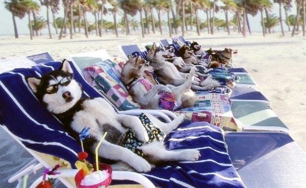 http://blog.gudog.co.uk/wp-content/uploads/2014/06/sunbathing_dogs.jpg
