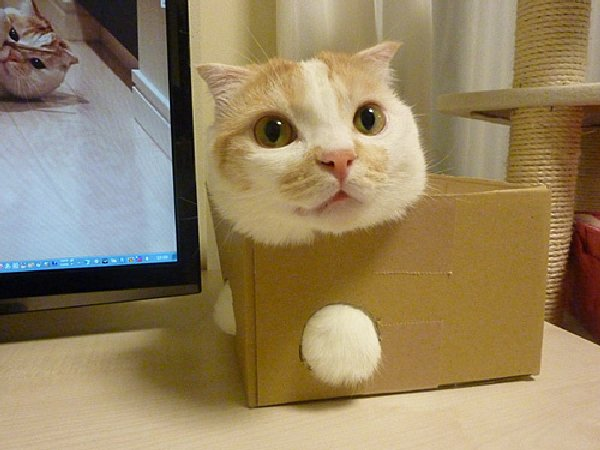 http://www.omgsocute.com/wp-content/uploads/2011/12/cat-stuck-in-a-box.jpg