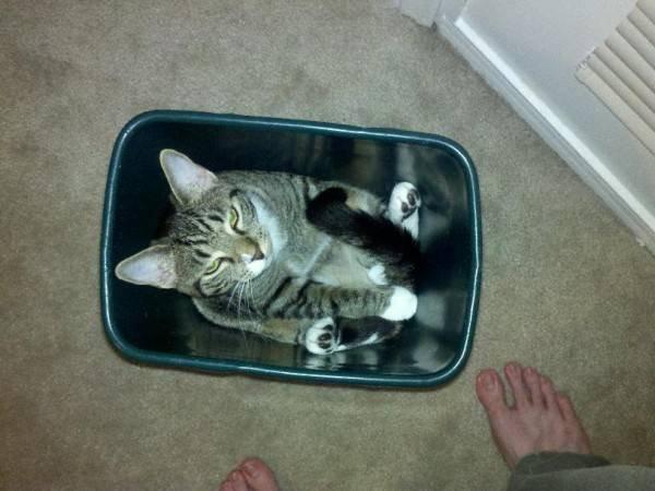 http://boredboard.com/wp-content/uploads/2014/03/fits_i_sits_cats_07.jpg