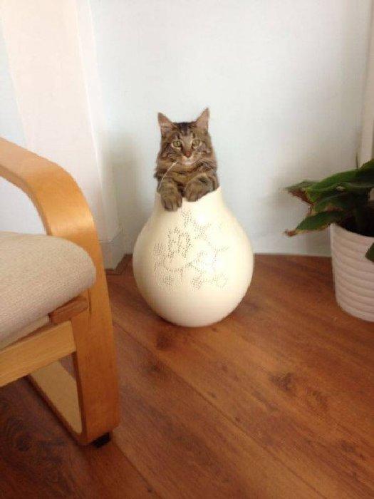 http://boredboard.com/wp-content/uploads/2014/03/fits_i_sits_cats_09-450x600.jpg