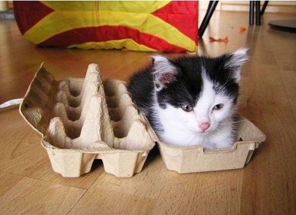 http://i2.wp.com/pulptastic.com/wp-content/uploads/2014/05/funny-cats-if-it-fits-i-sits-13.jpg?resize=605%2C440