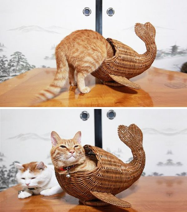 http://i1.wp.com/pulptastic.com/wp-content/uploads/2014/05/funny-cats-if-it-fits-i-sits-20.jpg?resize=605%2C685