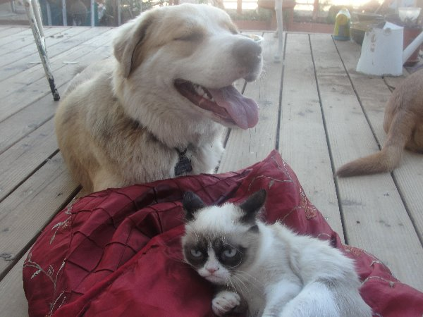 http://whyareyoustupid.com/wp-content/uploads/happy-dog-meets-grumpy-cat.jpg