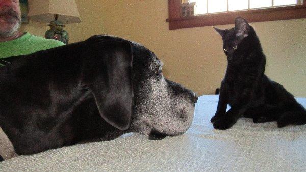 Rencontre entre chat et chien