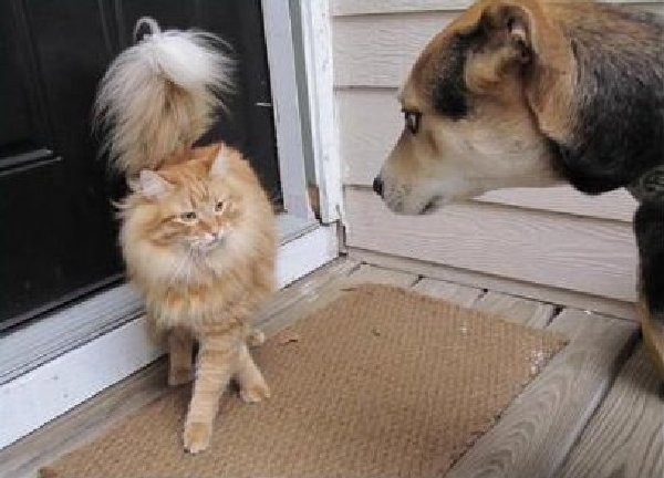 Rencontre-chiens-chats (15)