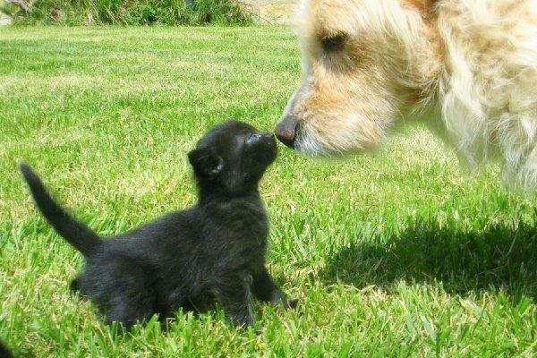 http://everystockphoto.s3.amazonaws.com/animal_grass_erba_8509_o.jpg