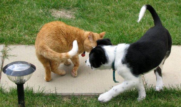 http://img01.deviantart.net/4b66/i/2006/215/e/2/cat_meet_dog__dog_meet_cat_by_iwinky.jpg