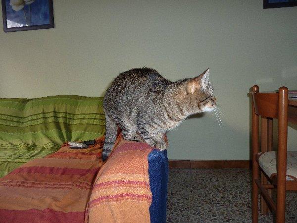 Skunky (13)