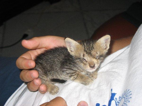 Skunky (5)