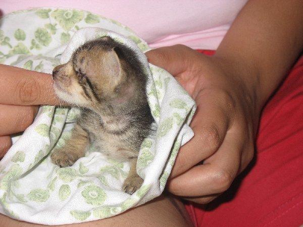 Skunky (7)