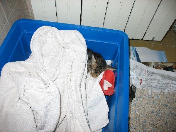 Skunky (8)