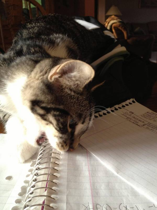 chats-devoirs (21)