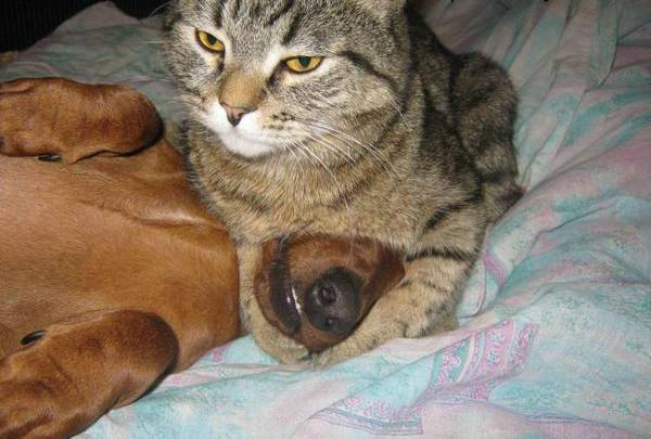 chiens-chats-bagarres (2)