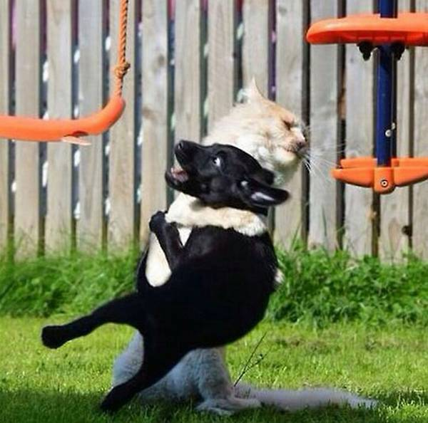 chiens-chats-bagarres (3)