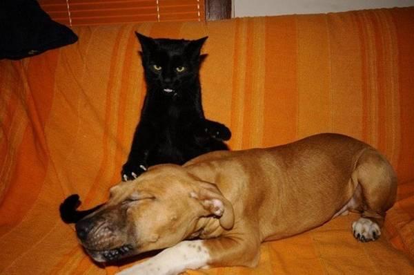 http://lh3.ggpht.com/-6icRKISssz4/T1OHwTrmRGI/AAAAAAAALcY/_hgfPJjqOFA/cat-vs-dog_thumb.jpg?imgmax=800