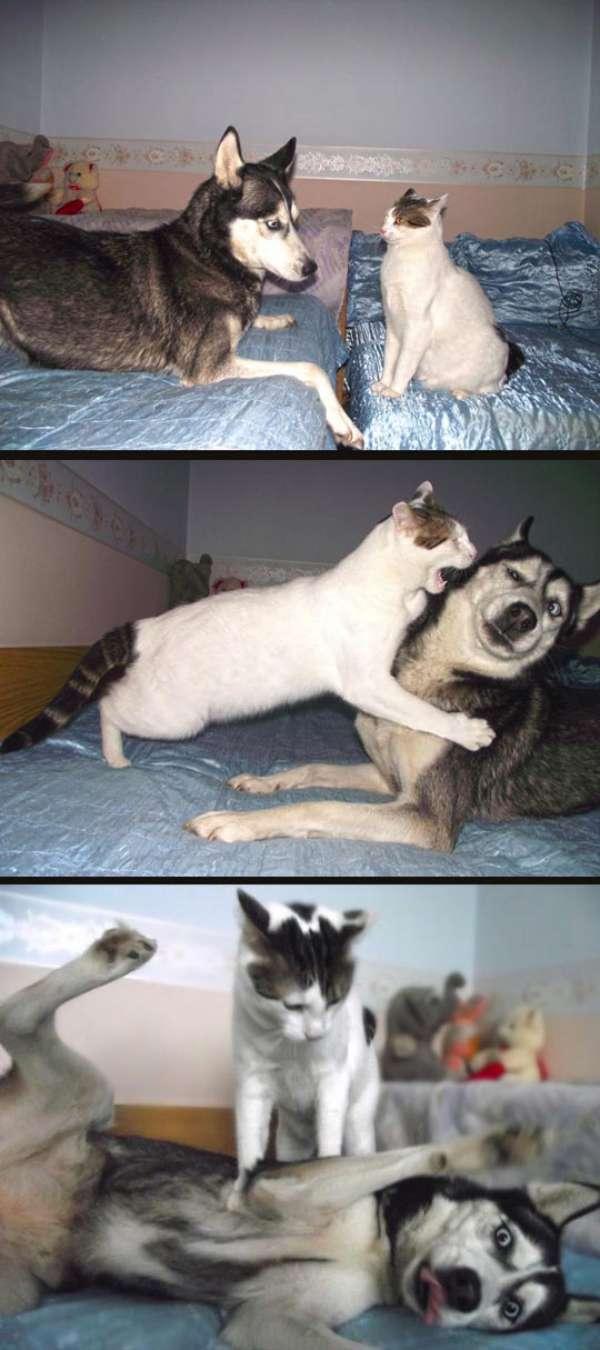 chiens-chats-bagarres (7)