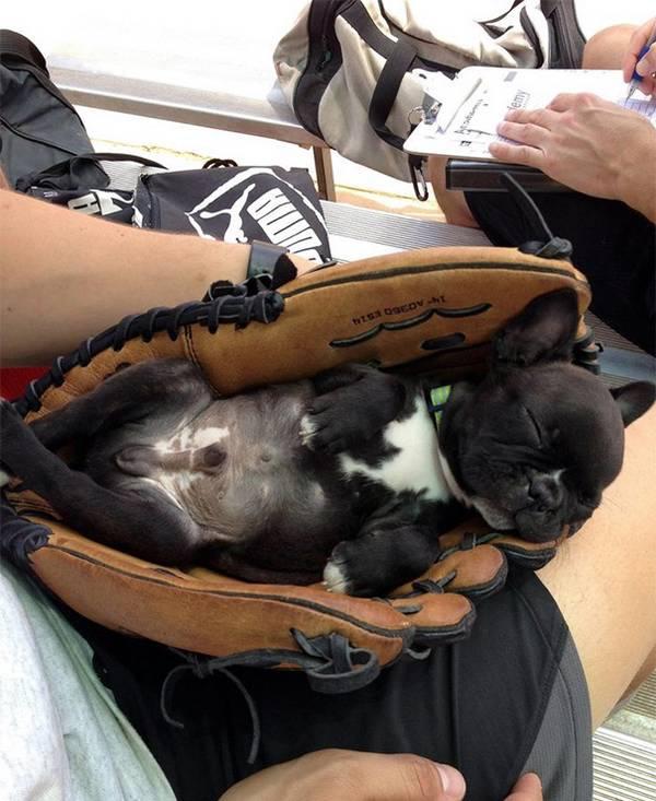 http://www.boredpanda.com/animals-sleeping-anywhere/