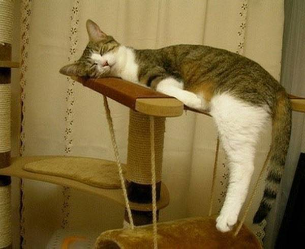http://www.designswan.com/archives/22-funny-sleeping-cat-pictures.html