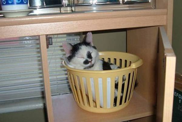 http://www.rd.com/funny-stuff/11-cats-sleeping-in-silly-places/