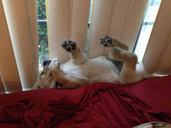http://piximus.net/animals/photos-that-prove-dogs-will-sleep-anywhere-as-long-as-they-can-fit