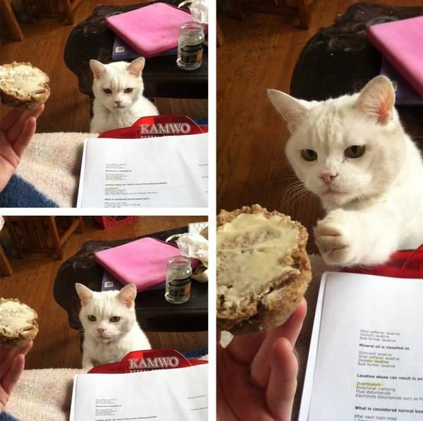 https://www.thedodo.com/cats-stealing-stuff-1055795661.html