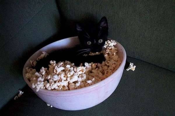 chiens-chats-obsedes-bouffe  (6)