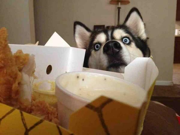 http://dogsandbones.com/dog-food-photos-gifs/26/