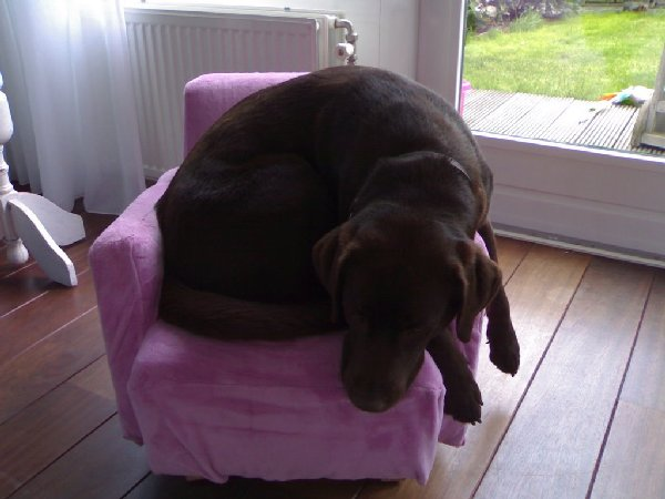 http://photos1.blogger.com/blogger/2519/1933/1600/big%20dog%20small%20chair%202.jpg