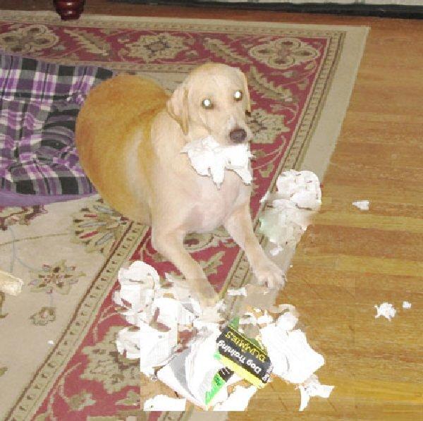 http://moderndogmagazine.com/sites/default/files/images/uploads/Sophie.jpg