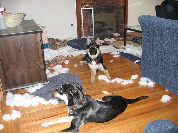 http://www.petsfoto.com/wp-content/uploads/2010/10/Dog-Is-Biting2.jpg