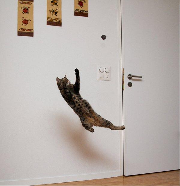 http://img04.deviantart.net/7c17/i/2011/107/c/0/flying_cat_5_by_oceanbased-d3e6onb.jpg