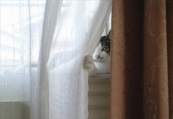 http://blog.blinds.com/wp-content/uploads/2014/12/the-world_s-top-10-best-images-of-cats-hiding-2.jpg