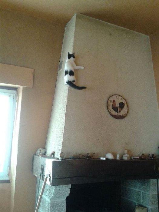 http://france-rezo.com/wp-content/plugins/RSSPoster_PRO/cache/3b498_ninja-cats-21.jpg