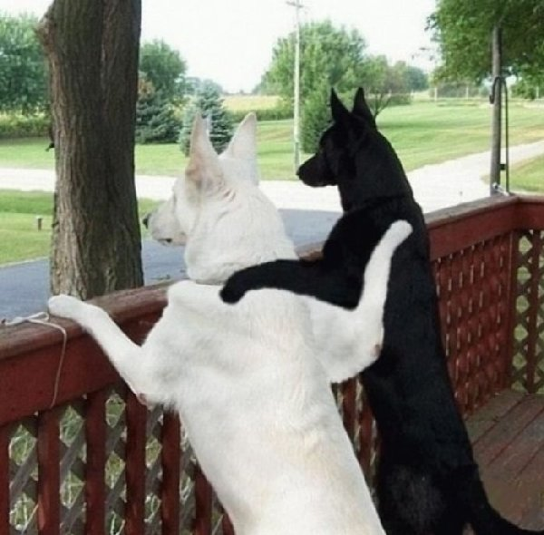 http://1funny.com/wp-content/uploads/2011/07/dog-couple.jpg