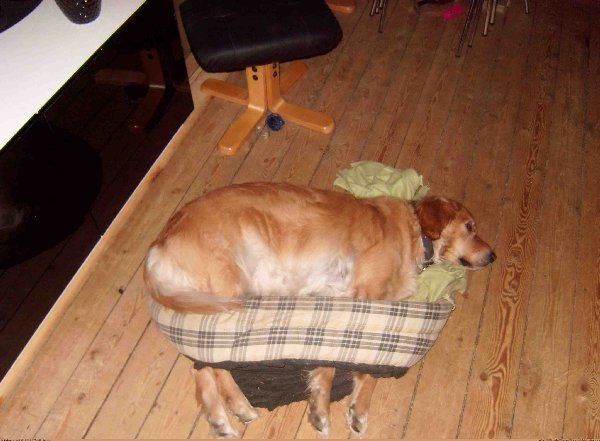 http://p.im9.eu/funny-my-dog-shredded-the-bottom-of-her-bed-but-still-insists-to-use-it.jpg
