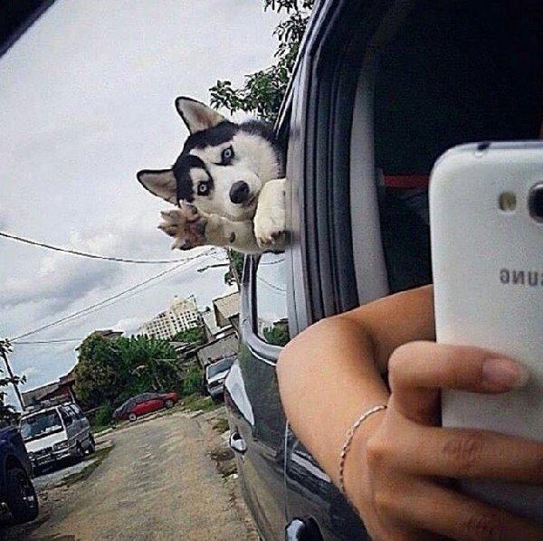 http://cdn1-www.dogtime.com/assets/uploads/gallery/guilty-dogs-gallery/guilty-dogs-24.jpg
