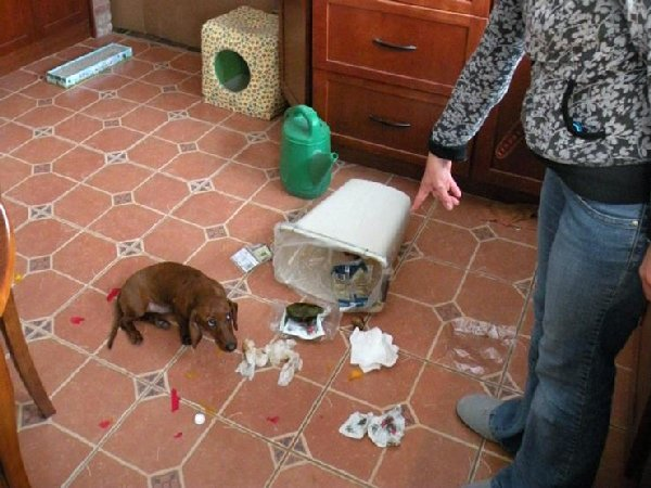 http://www.lifedaily.com/wp-content/uploads/2015/12/03-guilty-dog.jpg