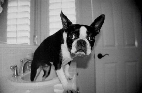 http://de.acidcow.com/pics/20100318/bathing_dogs_06.jpg
