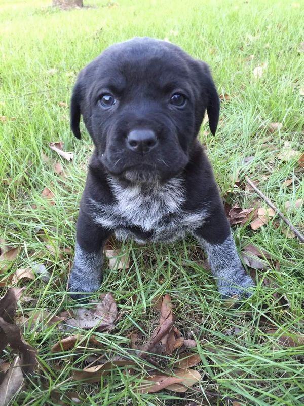 http://amazing-creature.blogspot.fr/2015/11/cute-dogs-part-99-50-pics.html#.VschM_LhC70