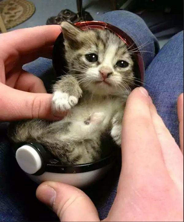 http://amazing-creature.blogspot.fr/2014/04/funny-cats-part-125-40-pics-10-gifs.html#.Vr3eFPLhC70