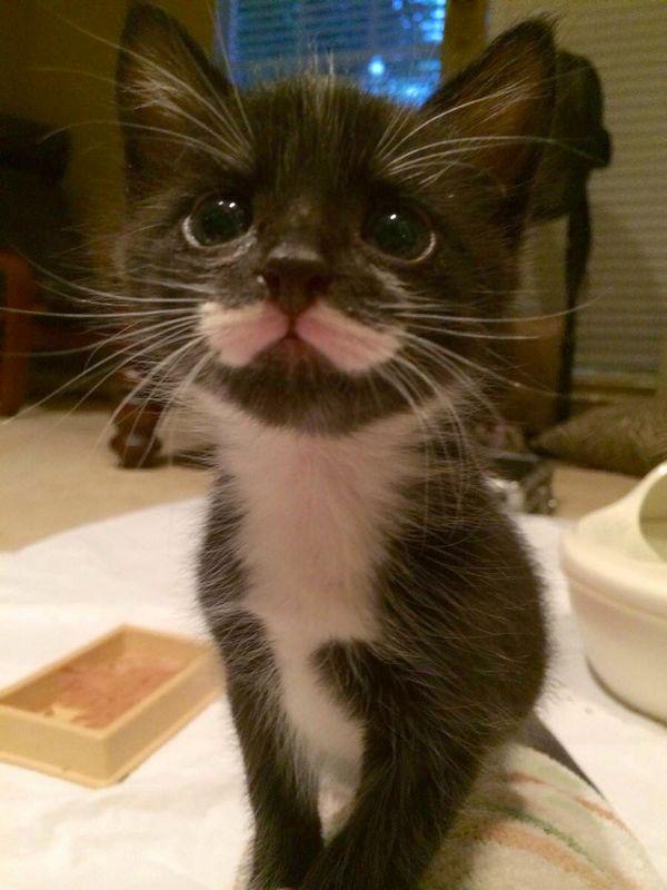http://amazing-creature.blogspot.fr/2014/10/funny-cats-part-122-40-pics-10-gifs.html#.Vrol7ljhC70