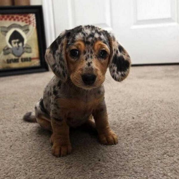 http://amazing-creature.blogspot.fr/2015/10/cute-dogs-part-96-50-pics.html#.Vsci-_LhC70