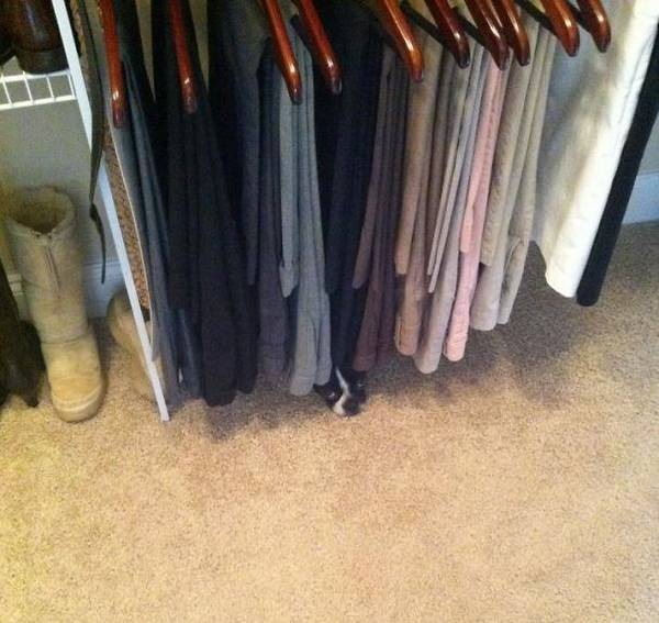 http://www.unmotivating.com/26-dogs-that-havent-figured-out-this-hide-and-seek-thing/