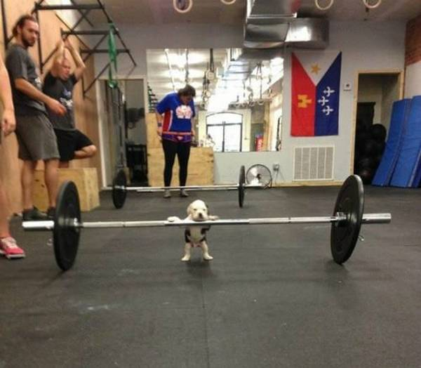 http://barkpost.com/how-to-exercise-with-your-dog/