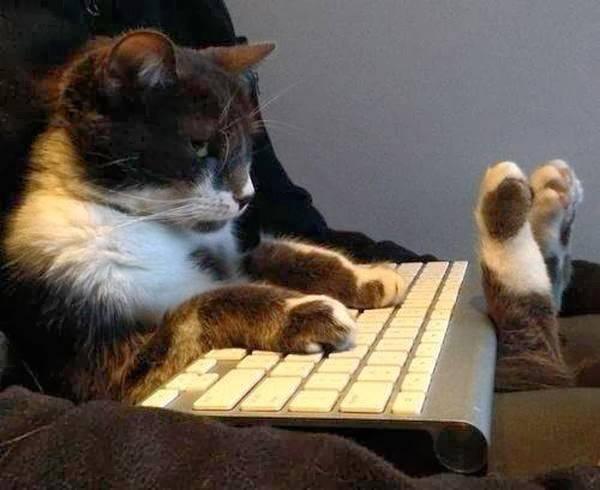 http://amazing-creature.blogspot.fr/2014/02/funny-cats-part-89-40-pics-10-gifs.html#.Vr9JbvLhC70