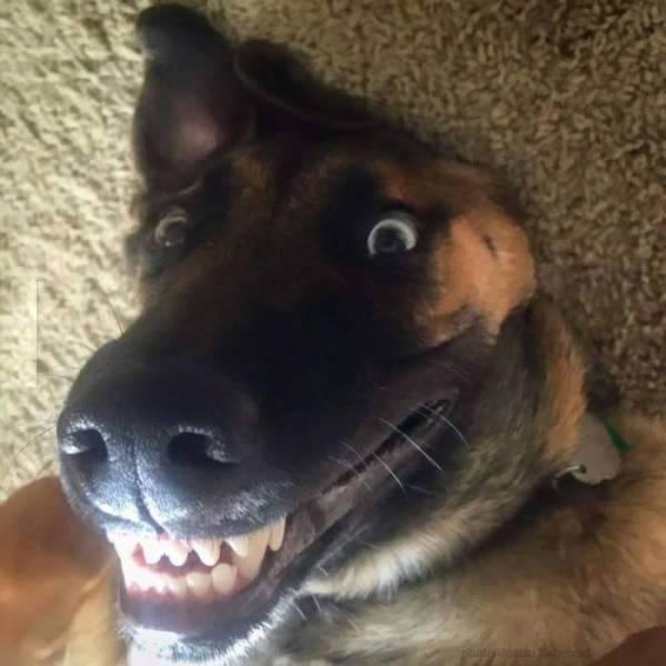 http://amazing-creature.blogspot.fr/2015/10/cute-dogs-part-94-50-pics.html#.VssQTJzhC70