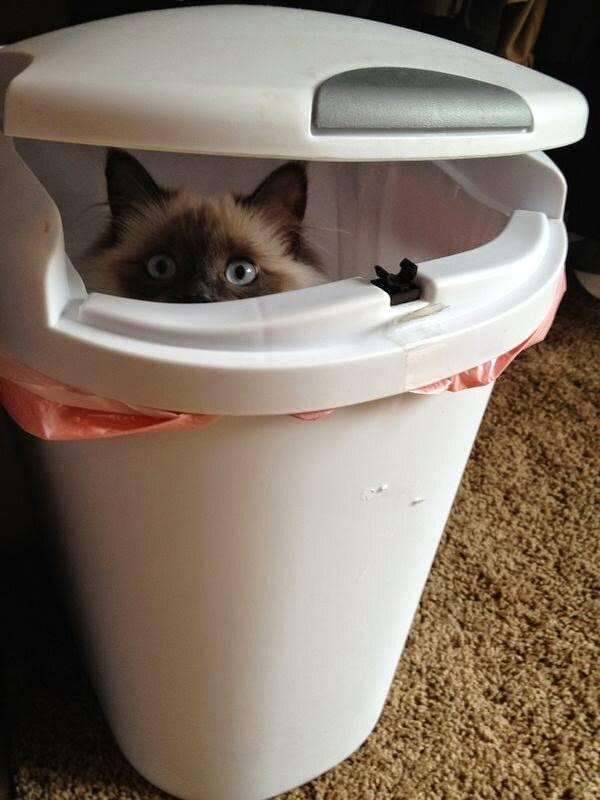 http://amazing-creature.blogspot.fr/2015/04/funny-cats-part-149-40-pics-10-gifs.html#.VrnnQ1jhC70